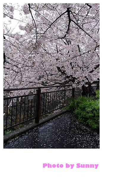 山崎川26.jpg
