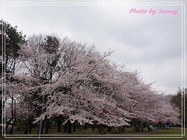 名城公園2.jpg