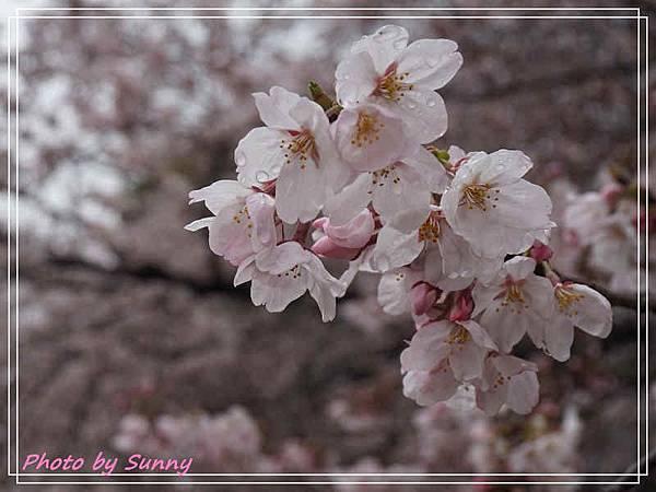 名城公園3.jpg