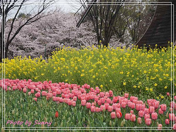 名城公園11.jpg