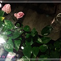 FUJI Flower1.jpg