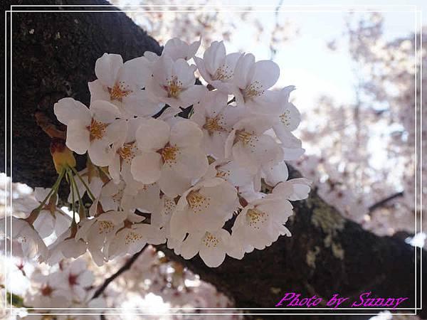 弘前公園10.jpg
