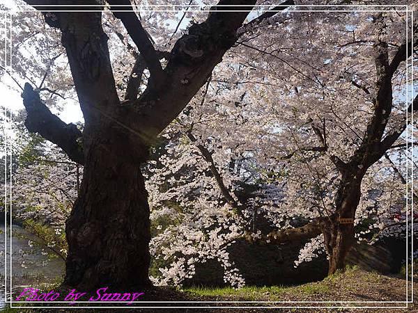 弘前公園14.jpg