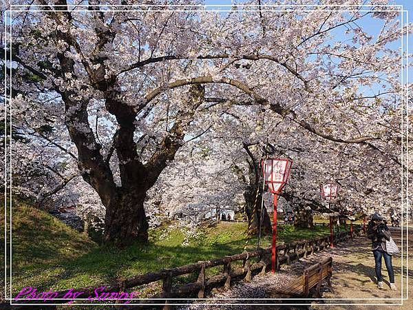 弘前公園15.jpg