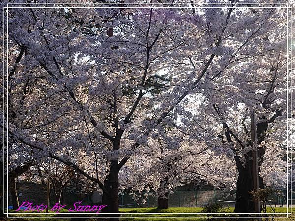 弘前公園22.jpg