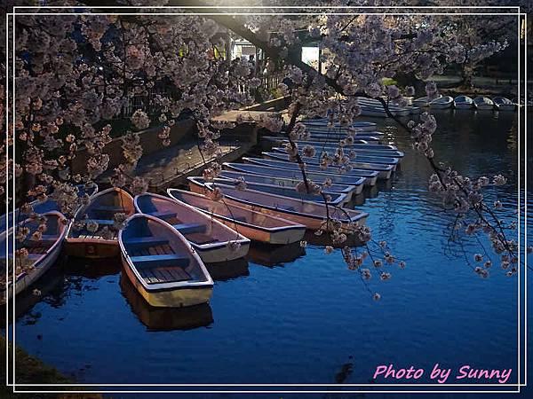 弘前公園46.jpg