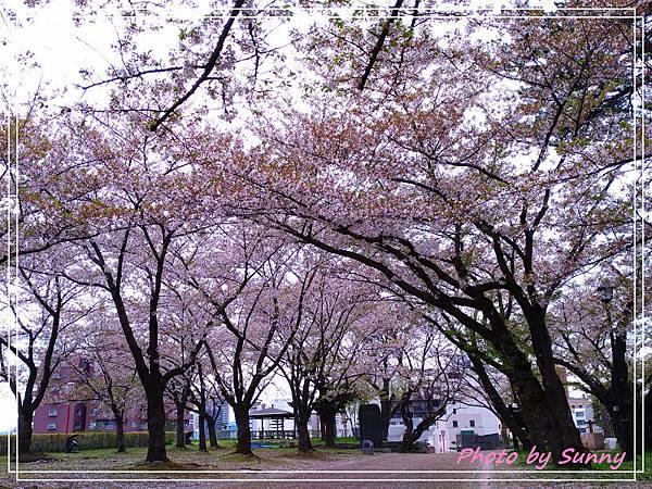 盛岡城跡公園6.jpg