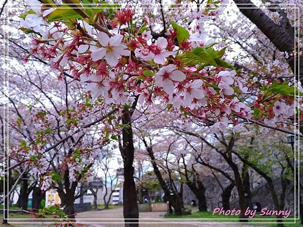 盛岡城跡公園7.jpg