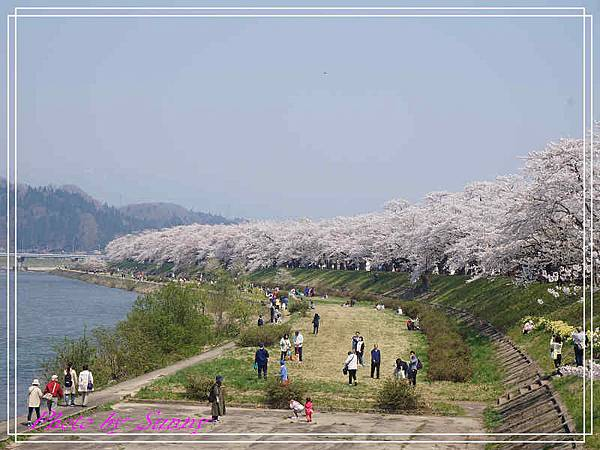 角館檜木內川19.jpg