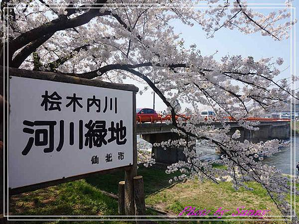 角館檜木內川23.jpg