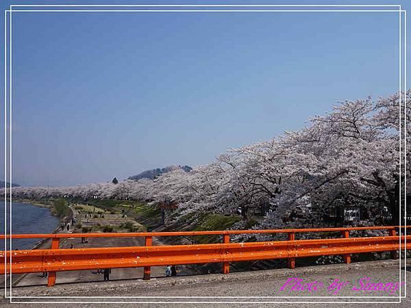 角館檜木內川24.jpg