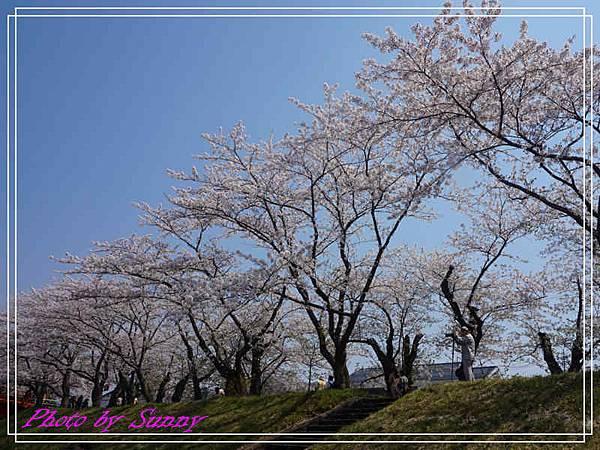 角館檜木內川28.jpg