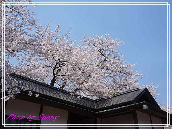 角館檜木內川32.jpg
