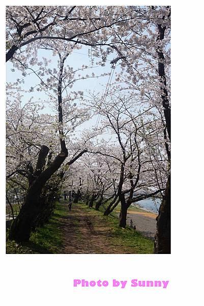 角館檜木內川48.jpg
