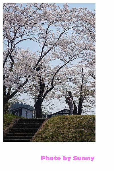 角館檜木內川49.jpg