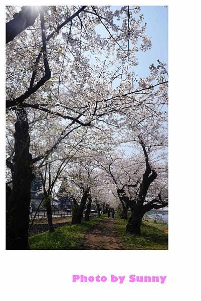角館檜木內川50.jpg