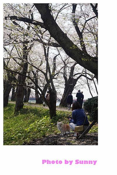角館檜木內川52.jpg