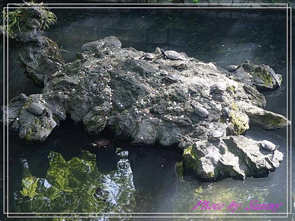 成田山新勝寺16.jpg