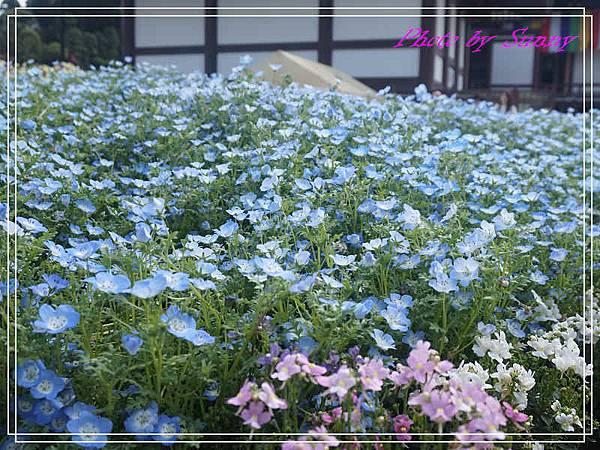 成田山新勝寺27.jpg