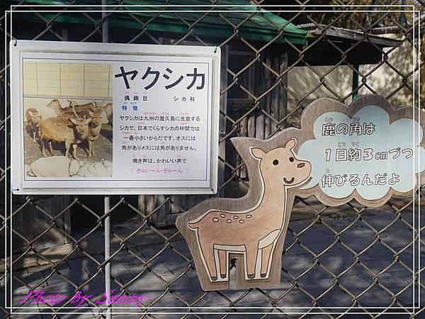 函館公園13.jpg