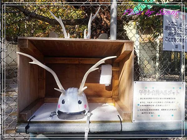 函館公園14.jpg