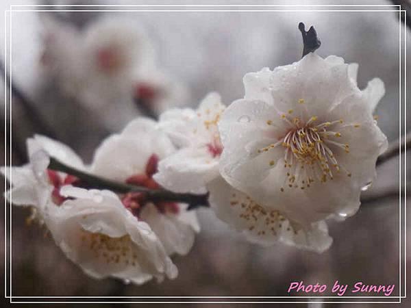 吉備津神社15.jpg