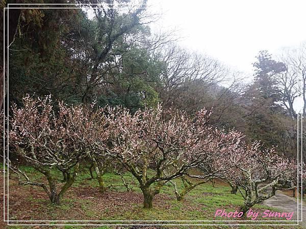 吉備津神社16.jpg