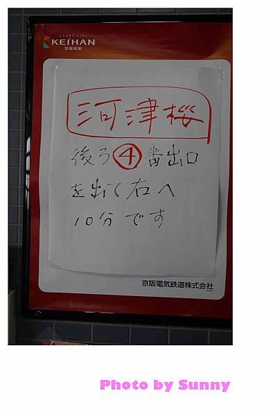 淀水路河津櫻21.jpg