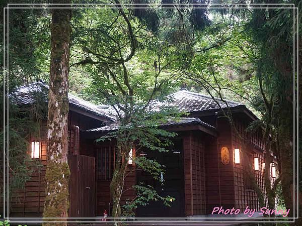 檜木原始林步道1.jpg
