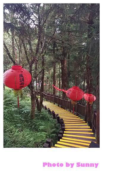 檜木原始林步道13.jpg