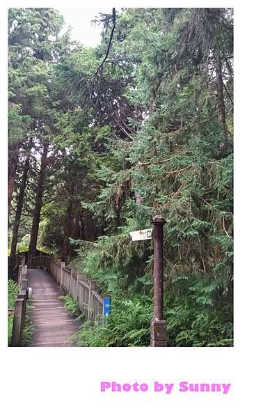 檜木原始林步道14.jpg