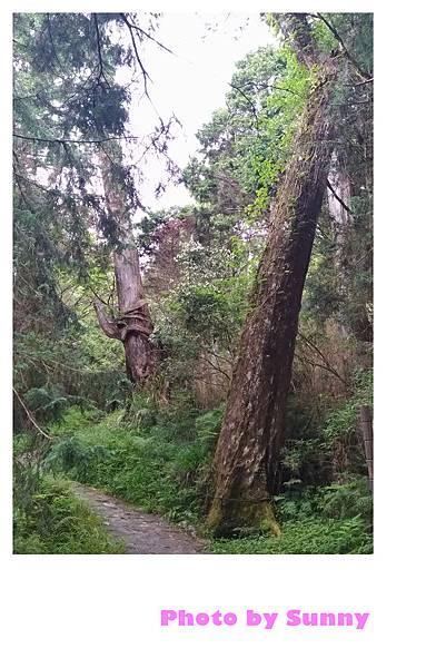 檜木原始林步道15.jpg