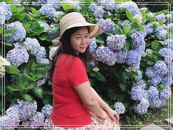 午後陽光繡球花8.jpg