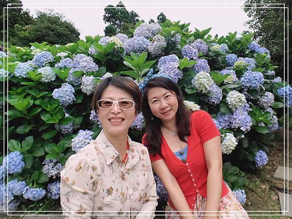 午後陽光繡球花9.jpg