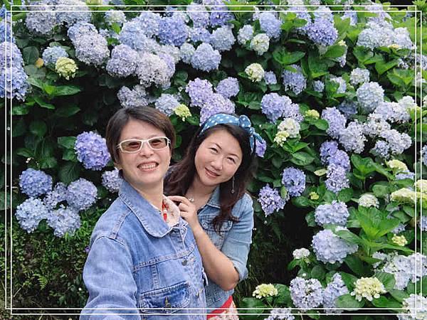 午後陽光繡球花10.jpg
