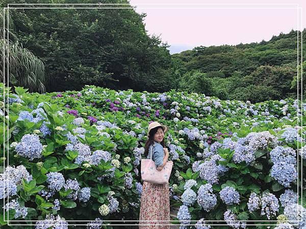 午後陽光繡球花12.jpg