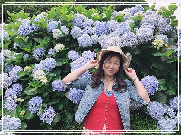 午後陽光繡球花11.jpg