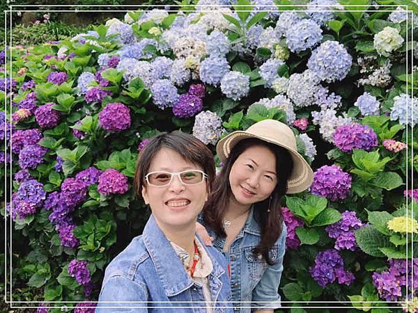 午後陽光繡球花13.jpg