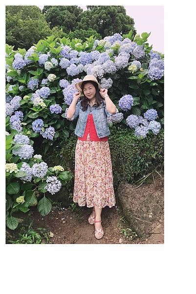 午後陽光繡球花18.jpg