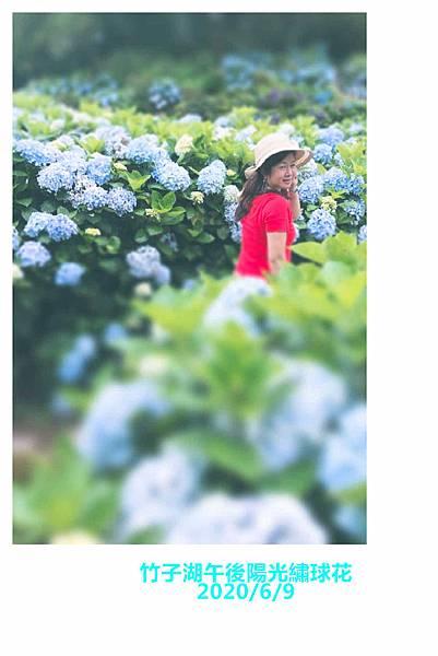 午後陽光繡球花20.jpg