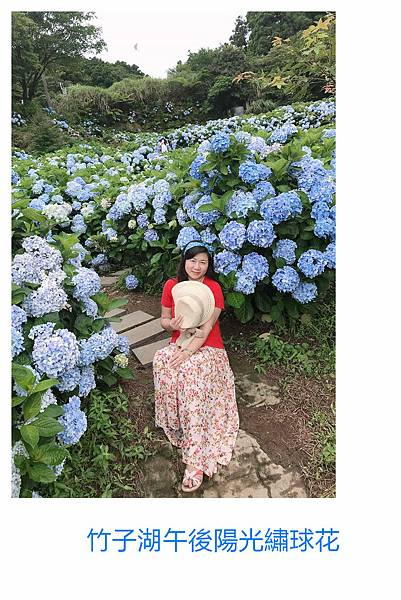 午後陽光繡球花16.jpg
