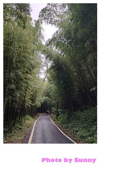 瑞里竹林綠色隧道1.jpg