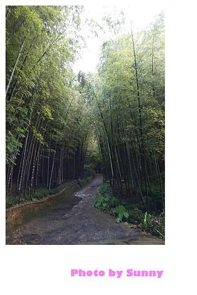 瑞里竹林綠色隧道6.jpg