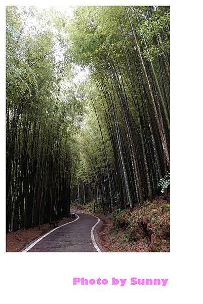 瑞里竹林綠色隧道4.jpg