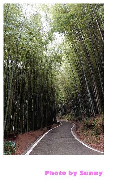 瑞里竹林綠色隧道3.jpg