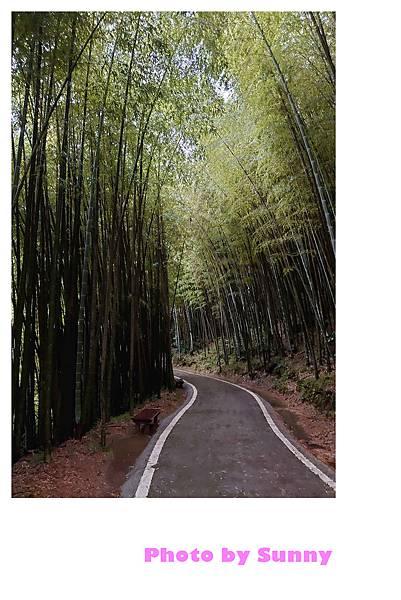 瑞里竹林綠色隧道5.jpg
