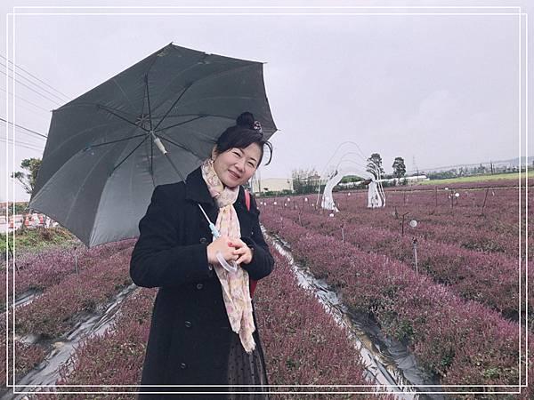 桃園仙草花6.jpg