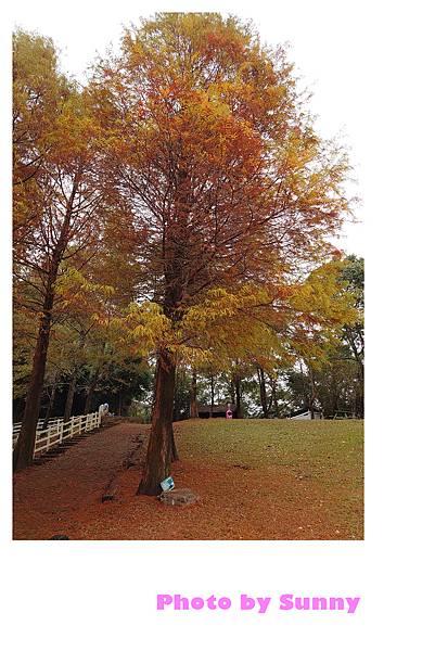 綠光森林15.jpg
