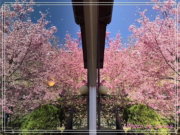 拉拉山楓墅民宿1.jpg