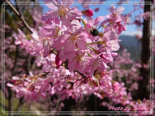 中巴陵櫻木花道2.jpg